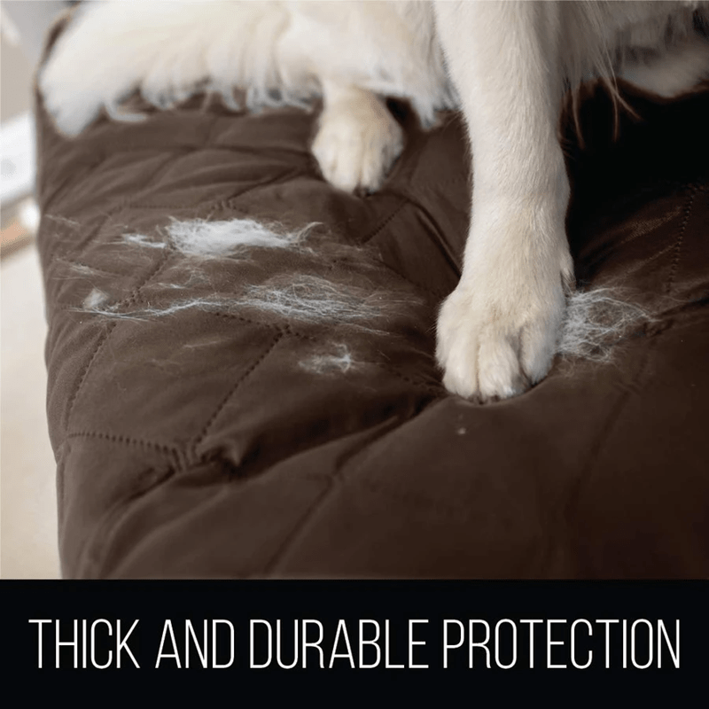 protect dog fur on sofa covers